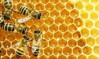 Program poprawy warunków fitosanitarnych rodzin pszczelich poprzez wsparcie zakupu pokarmów pszczelich